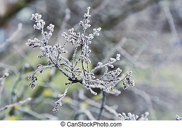 tree branch in the winter covered with hoarfrost