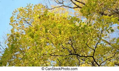 tree branch leaf move