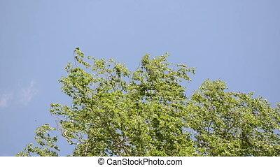 tree branch leaves sky