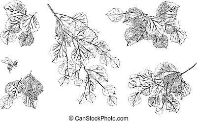 Tree branch leaves vector set