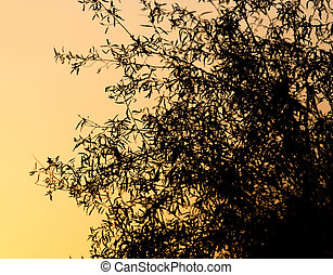 tree branch on a background of dawn