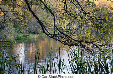 Tree branch on a background of lake.