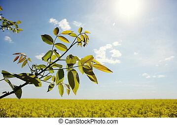 tree branch on a blue sky background