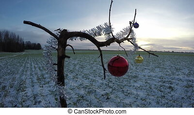 tree branch on field with Christmas bauble and sunrise, time...