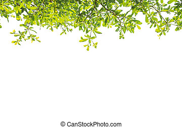 Tree branch on top on white background