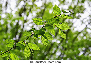 Tree branch over blurred green leaves background