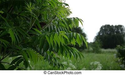 tree branch rain