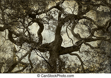 Tree branch vintage background