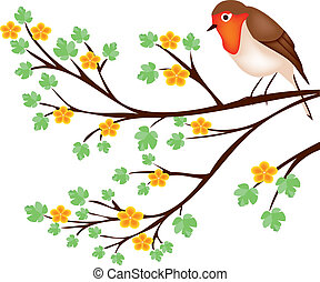 tree branch with a robin
