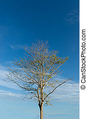 Tree branch with blue sky background