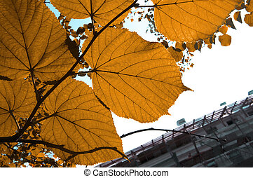 Tree branch with bright colorful brown autumn leaves on city building background