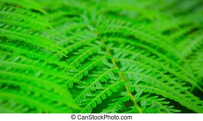 Tree Branch with Compound Leaves in Selective Focus - Video...