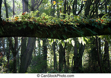 Tree Branch with Ferns and Moss and Slanted Sunlight