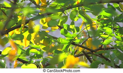 Tree branch with green and yellow