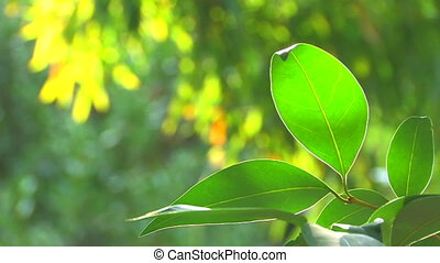 Tree branch with green leaves,