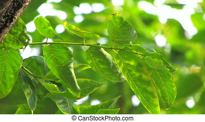 Tree branch with green leaves