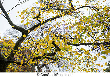 Tree Branch with yellow leaves, autumn. With blue sky background