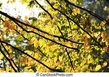Tree branch with yellow leaves in autumn park. Background