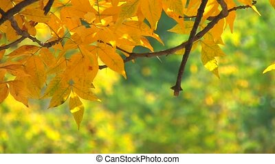 Tree branch with yellow leaves