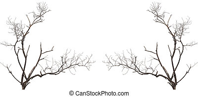 Tree branch without leaf isolated on white