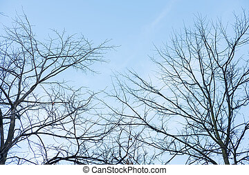 Tree Branch without leaves, autumn. With blue sky background