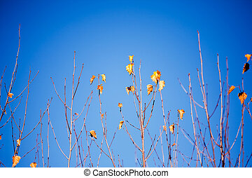 Tree branches against blue sky