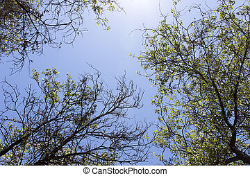 tree branches against the blue sky