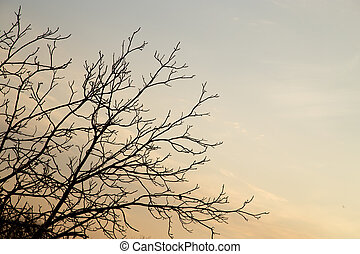 tree branches against the sky with clouds