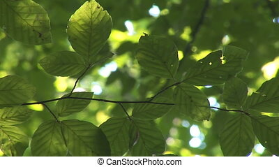 branches - tree branches and leaves in the forest
