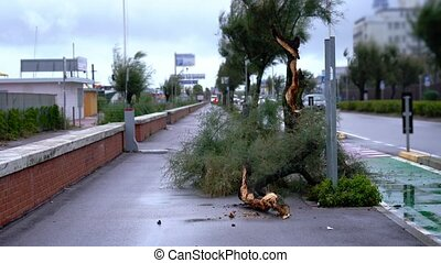 Tree branches and trunk lie on sidewalk against passing cars...
