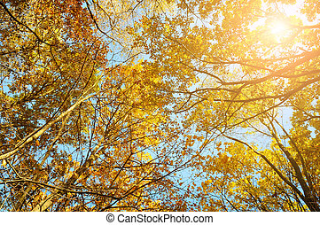 tree branches and yellow autumn leaves against the blue sky