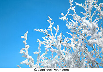 Tree branches are covered with hoarfrost against the blue sky.