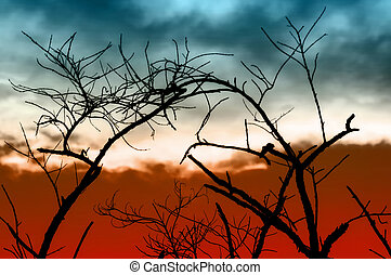 Tree branches at tropical sunset