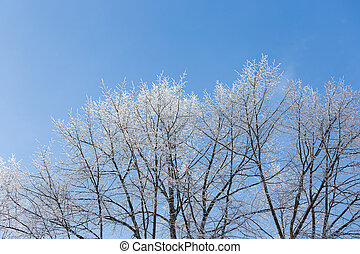 Tree branches covered in frost snow