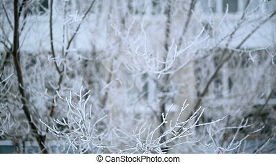 the wind in the winter - tree branches covered with frost...