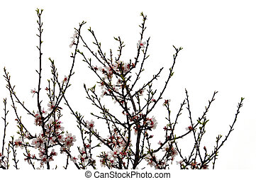 tree branches flowers