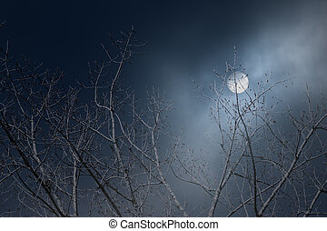 Tree branches in a foggy full moon night