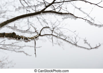 Tree branches in frost, close-up. Misty winter forest
