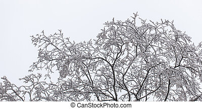 tree branches in frost