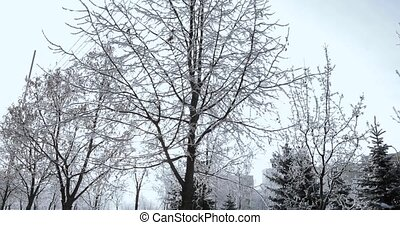 Tree branches in hoarfrost - City park and pedestrians...