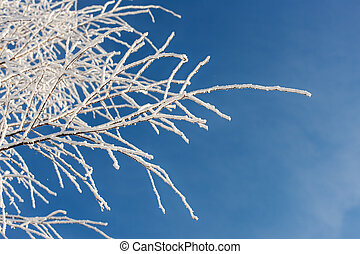 tree branches in the hoarfrost