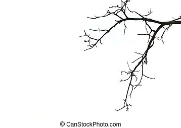 Tree branches isolated on white background.