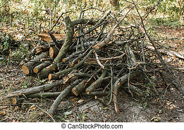 tree branches lie in a heap in the forest