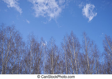 Tree branches on a background of blue sky with clouds