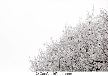 tree branches on a snowy day in the winter forest