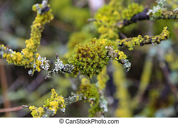 Tree branches overgrown with moss and lichen
