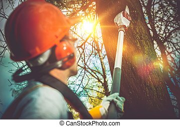 Tree Branches Pro Cutting. Unsafe Branches Removal by...