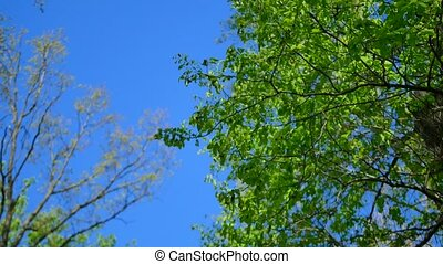 tree branches the blue sky background