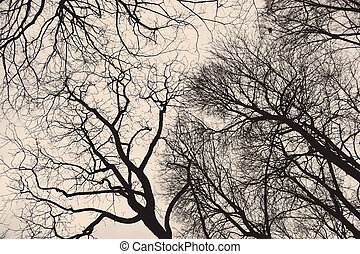 Tree branches/ twigs in winter
