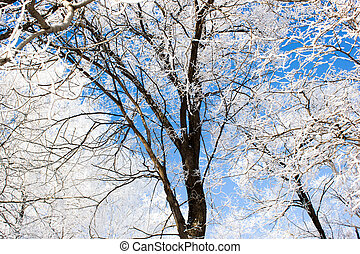 Tree branches under the snow, closeup
